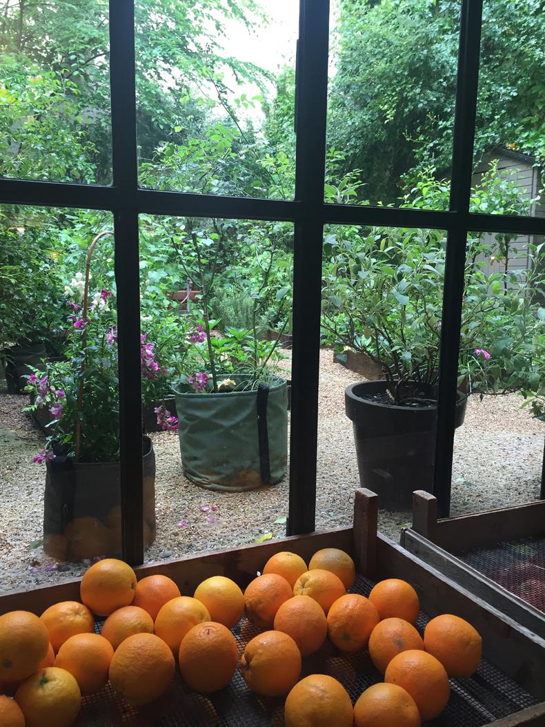 ארגזי תפוזים  במרסי