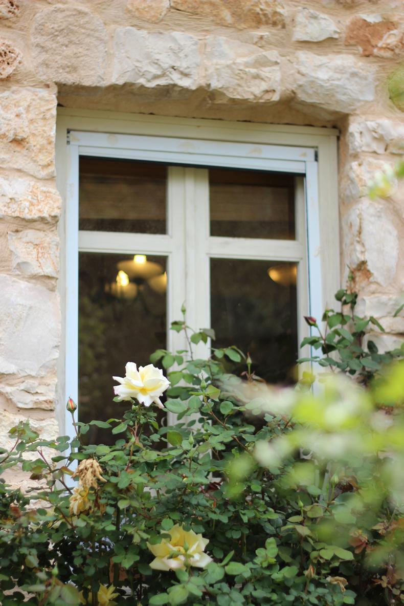 ורד צהוב בחלון