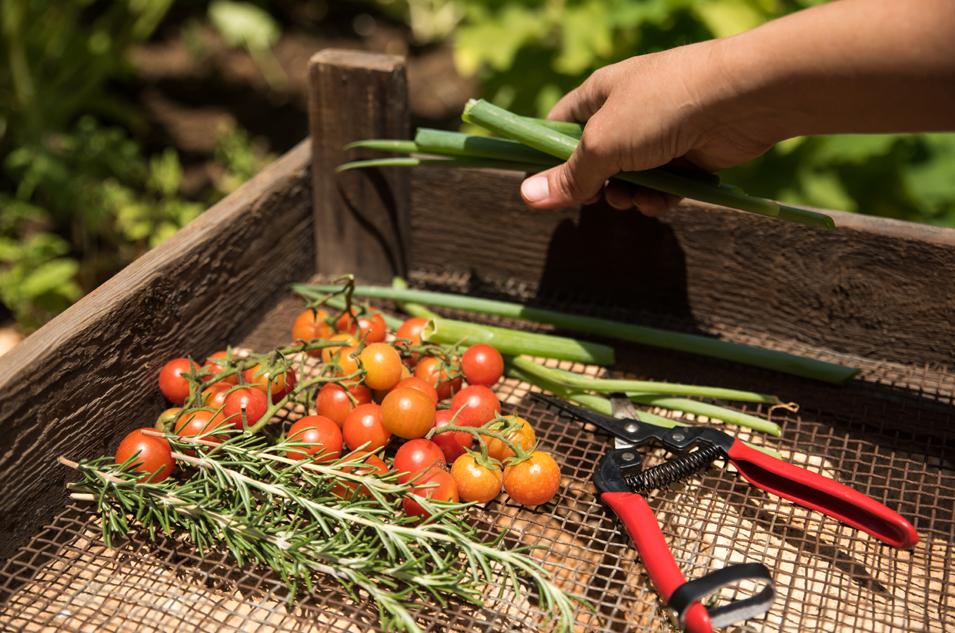 11 ארגז עגבניות
